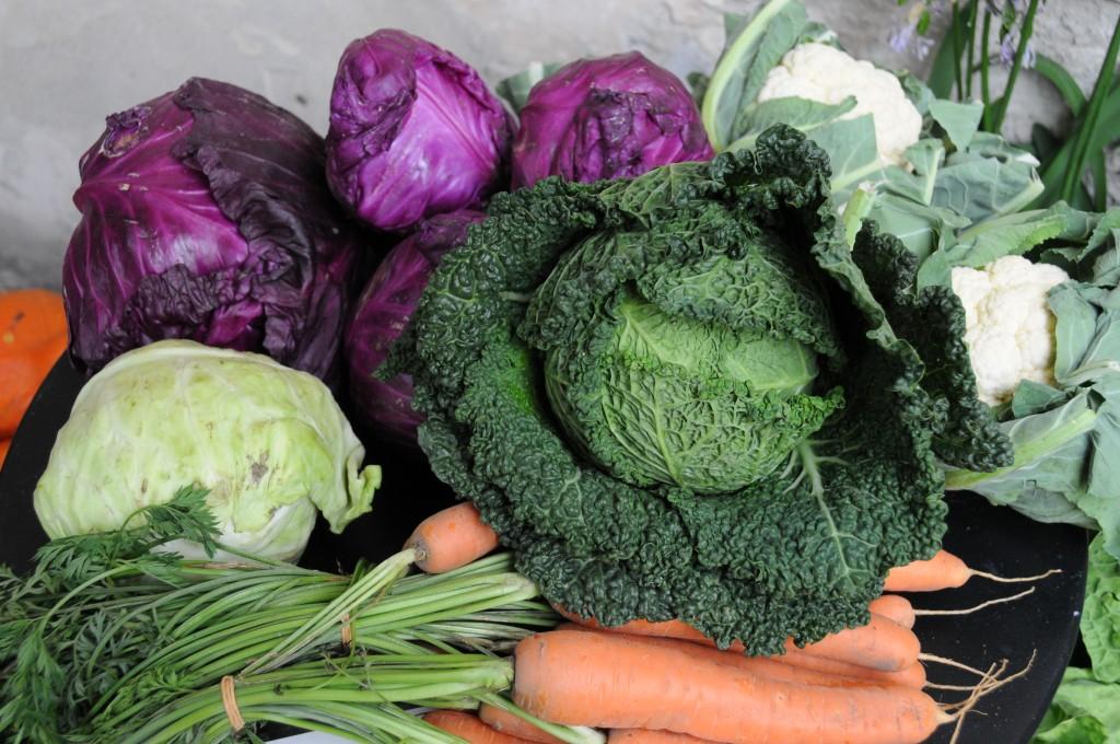 frisch geernteter Kohl und knackiges Gemüse